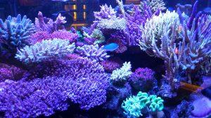 サンゴの日
